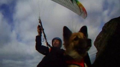 helico with dog