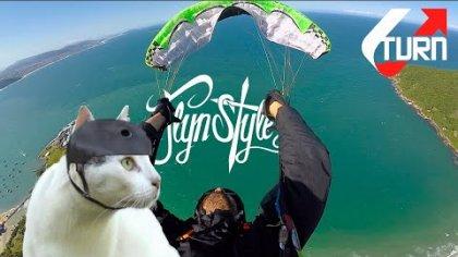 Cool Cats   Max Martini